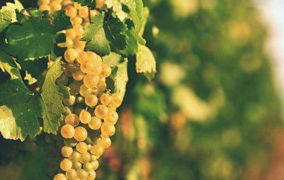 Guide – sådan smager du på din vin