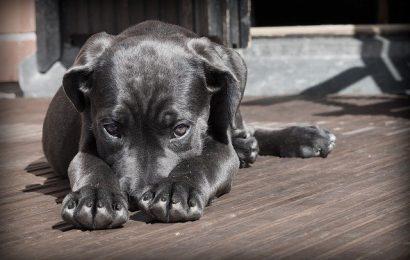 Find den rigtige sele til din hund eller kat